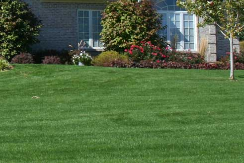 Lawn in Berkeley Heights, NJ with lawn care services from The Lawn Techs.