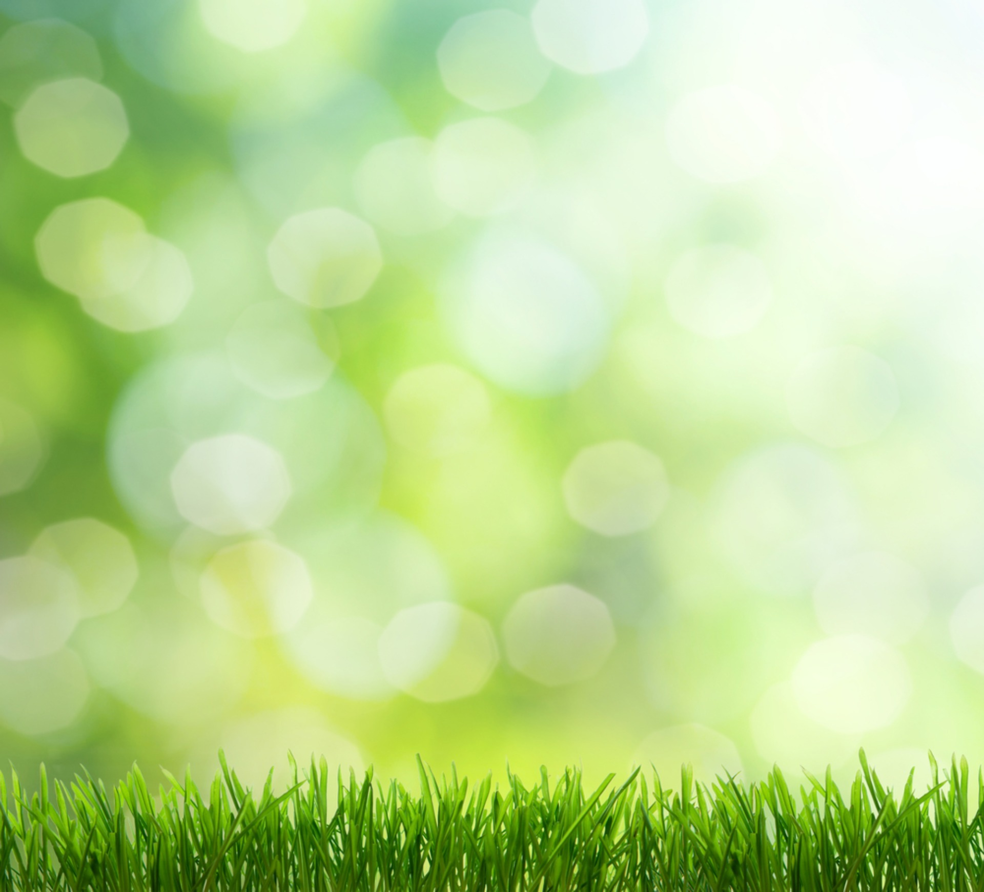 Lawn Care Company in Long Hill NJ