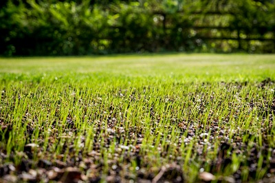 Lawn Renovations and Repair Services by The Lawn Techs